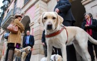 el-perro-guia-un-companero-fiel-y-necesario-para-la-sociedad_jil4z