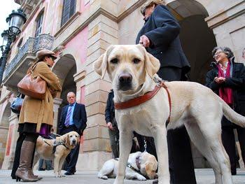 El Perro Guía un compañero fiel y necesario para la sociedad