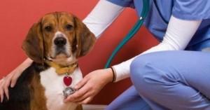 el-perro-y-su-corazon-saludable_zfl1g