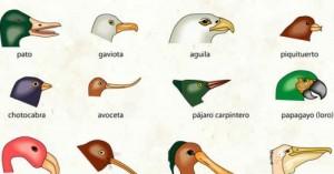 el-pico-de-cada-ave-define-su-alimentacion_9up3i