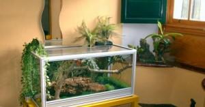 el-terrario-ideal-para-una-piton-mascota_r47mv