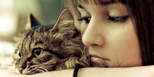 El tiempo de las caricias para el gato