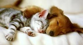 el-tratamiento-de-cancer-en-perros-y-gatos_hxime