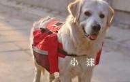el-uso-de-mochilas-para-perros_livze
