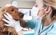 elige-bien-al-veterinario-de-tu-mascota_mln9z