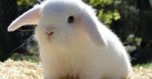 eligiendo-un-conejo-sano_zq2bu