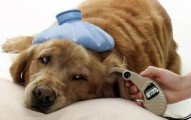 enfermedades-propias-de-las-mascotas_zai72