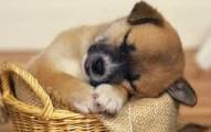 ensenando-al-perro-a-dormir-en-su-lugar-y-mucho-mejor_y45xw