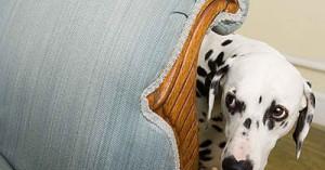 entrenamiento-para-que-tu-perro-no-tenga-miedo-a-los-ruidos-fuertes_0c8gy