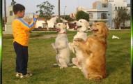 entrenamiento-sencillo-para-que-el-perro-preste-atencion_wsxp5