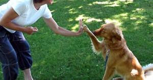 entrenando-a-nuestro-perro_gdwoe