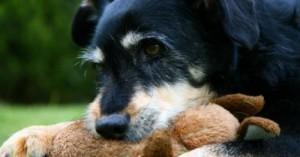 envejecimiento-del-perro-sintomas-y-consejos-para-su-salud_vra2d