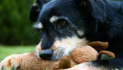 Envejecimiento del perro: síntomas y consejos para su salud