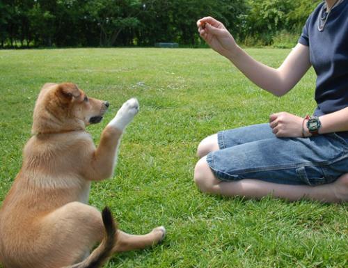 Errores que no debes cometer al educar al perro