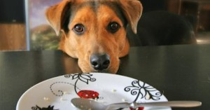 evita-que-el-perro-robe-comida_g8vxm