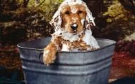 evitando-el-mal-olor-de-nuestro-perro_u0n2v