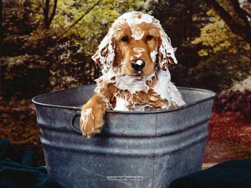 Evitando el mal olor de nuestro perro