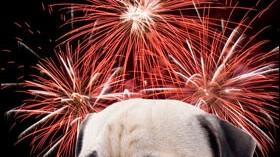 evitando-el-miedo-de-los-perros-a-los-fuegos-artificiales_76lm8