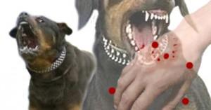 evitando-la-agresividad-en-los-perros_i9ngm