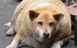evitando-la-obesidad-en-mi-mascota_45xc6