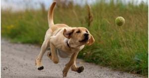 evitando-que-nuestro-perro-ladre_eqv63
