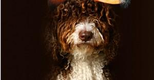 fotografias-o-retratos-profesionales-de-mascotas_lmcfg