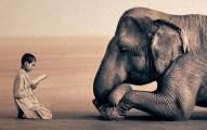 frente-al-sufrimiento-animal-no-te-conviertas-solo-en-reflexion_t35i9