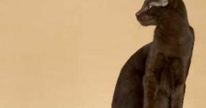 gatos-cafe-habana_dp1rs