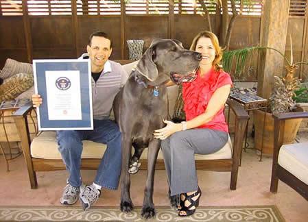 George el perro más grande del mundo