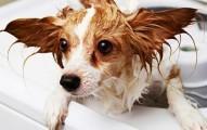 higiene-y-champu-para-perros_rctfj