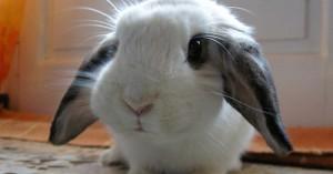 ideas-de-nombres-para-los-conejos_ufnzq
