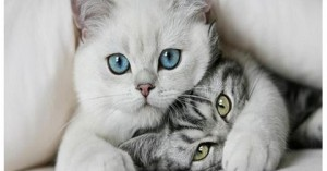 impresionantes-curiosidades-de-los-gatos_vp4r1
