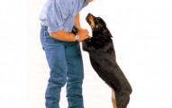 interpretando-el-lenguaje-de-nuestro-perro_b8o3q