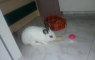 juguetes-caseros-para-los-conejos_k9nbh