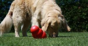 juguetes-interactivos-para-perros-curiosos-y-llenos-de-energia_j2wah