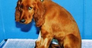 la-artrosis-en-los-perros_8e3zr