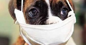 la-contaminacion-ambiental-afecta-a-las-mascotas_vrxqe