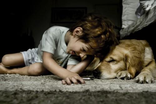 La educación con Amor dará justificación a tener mascotas