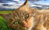 la-esterilizacion-una-buena-alternativa-en-los-gatos_oiuwd