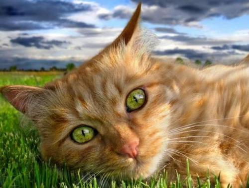 La esterilización: una buena alternativa en los gatos