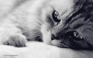 la-gravedad-del-tifus-felino_rk0h3