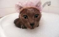 la-hora-del-bano-en-los-gatos_uaohz