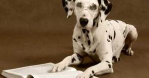 la-inteligencia-en-los-perros_xsvty