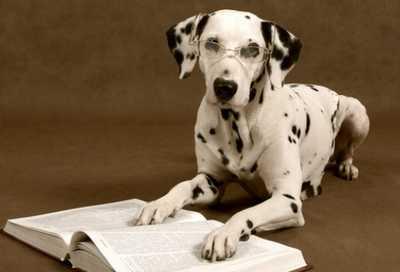 La inteligencia en los perros