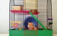 la-jaula-del-hamster_x0w19