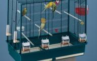 la-jaula-ideal-para-los-periquitos_2he0j