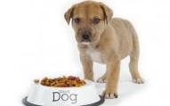 la-mejor-dieta-para-los-cachorros_kyqdb