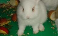 la-mejor-dieta-para-los-conejos-enanos_p6517