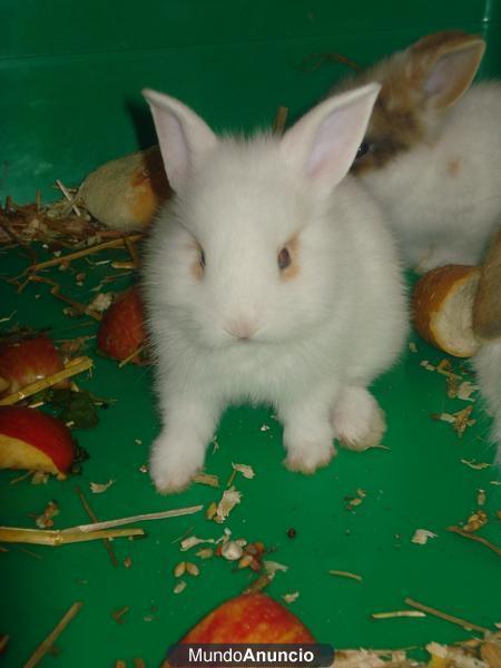 301 moved permanently - Casas para conejos enanos ...