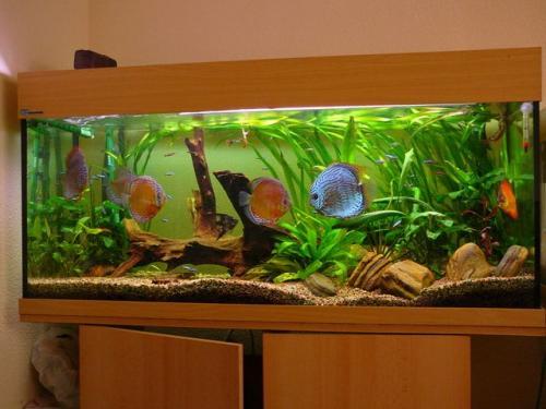 La mejor forma de instalar un acuario en casa canal mascotas - Acuario en casa ...
